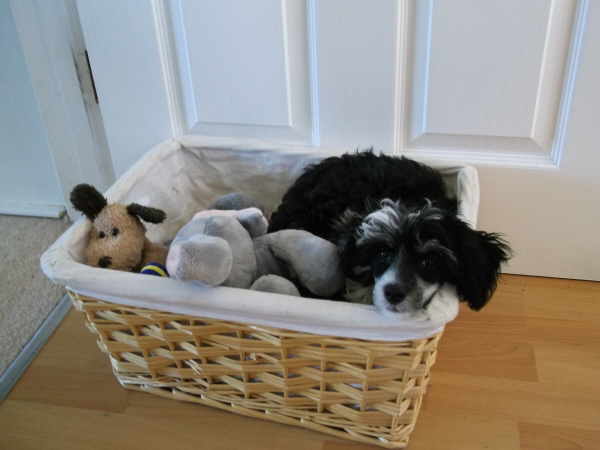 Evie in the Toy Basket