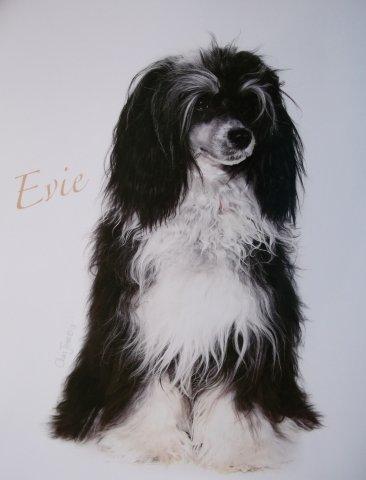 Evie posing