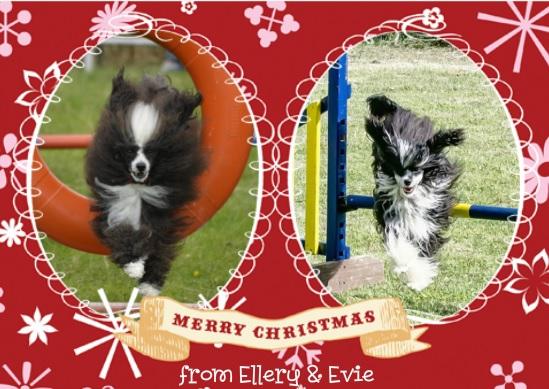 Agility Christmas greetings