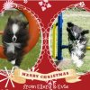 Agility Christmas greetings