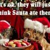 funny Dog xmas pics05