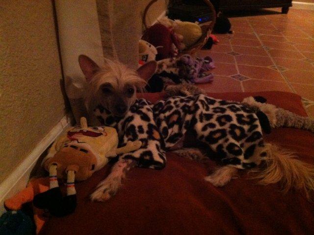 Lexi the Leopard! Thanks again Stella's Mom!