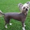 Vote For Naked K9 And Help Us Win $500.00 - last post by Hairy Junebugs
