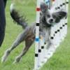 Empingham agility show :) - last post by deedswan